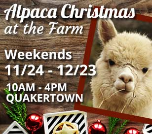 Looking for that old fashioned and magical family holiday experience? Bring the family to our 1880s beautiful Bucks County farm, (on BLACK FRIDAY), Saturdays and Sundays, from 10--4-pm until Christmas to visit with our 40 alpacas, including 4 new fall babies. Enjoy a complimentary cup of hot cocoa as you browse through the local PRE-CUT Christmas trees and listen to holiday music. Then go upstairs in the winter wonderland barn and warm your hands by the fireplace. Decorate a live wreath with your family with a handmade bow, holly, cones and sprigs all gathered here at the farm. SANTA WILL VISIT THE FARM ON SATURDAY DECEMBER 9TH, from 1:30 until 3:30 pm Looking for a special gift? We have a large selection of unique alpaca products and yarns, everything from blankets, sweaters, rugs, mittens, gloves, hats, scarves, socks, teddy bears and much more. (Alpacas also for sale.) MC/VISA and DISCOVER accepted. We are open rain/snow or shine since we have a great DRY barn. Come share the ALPACA Christmas magic! Harley Hill Farm is located at 451 Kellers Rd, Quakertown, PA 18951, phone 215-536-2841.